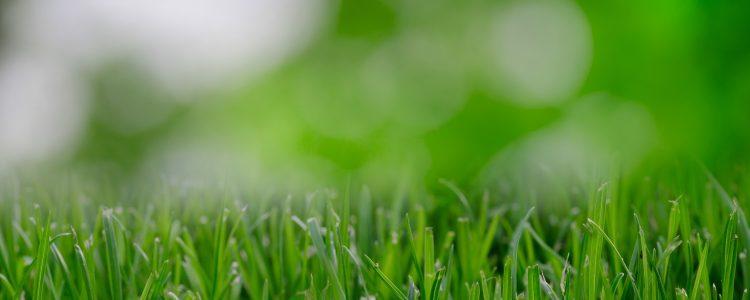 Lawn Aeration or Sodding & Seeding